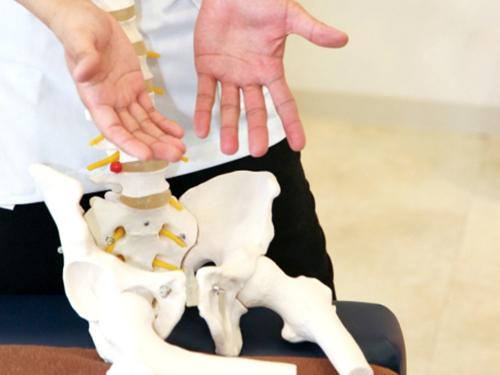 骨の模型を用いた説明